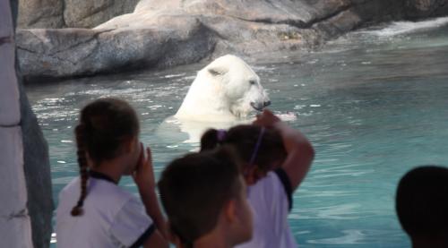 urso polar aquario de sp são paulo passeio crianças semana da criança